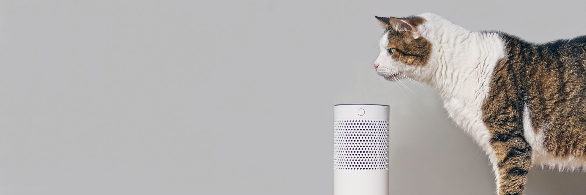 smart-home-katze-1920.jpg